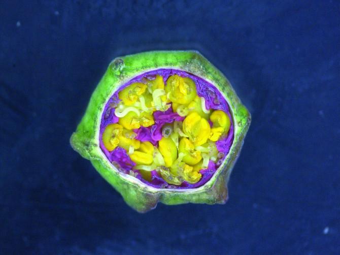 국제바이오현미경사진전  제공